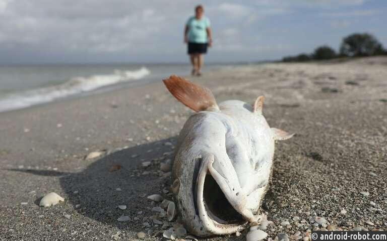 Из-за засухи в реках Австралии погибло около миллиона рыб