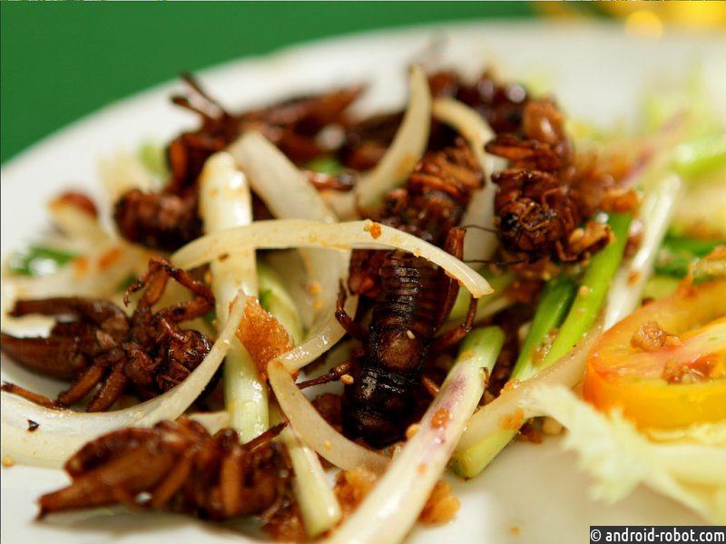 Выращивание насекомых для еды было экологически чистым, сообщают ученые