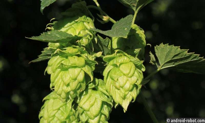Новое исследование показывает, что крафтовое пиво должно храниться в прохладном состоянии