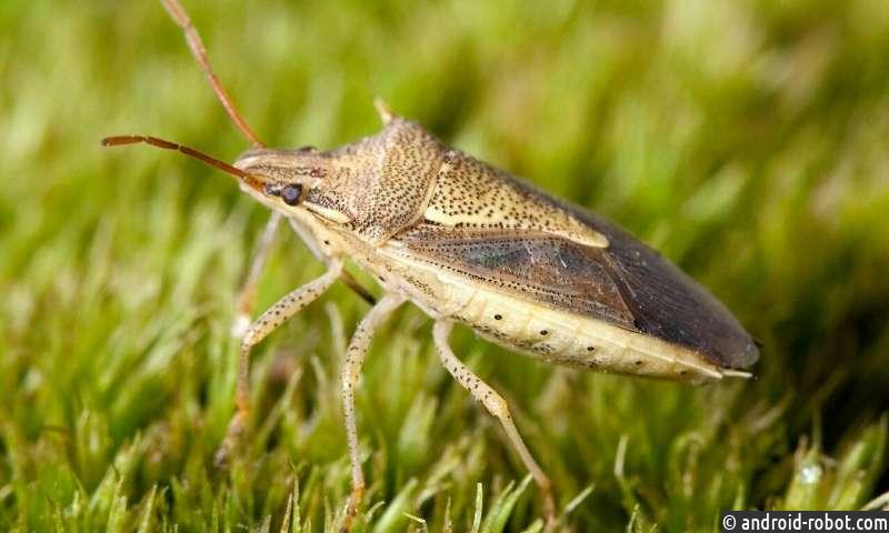 Ученые пытаются сохранить насекомых, растений и микробов