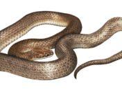 Герпетологи описывают новые виды змей, найденные в желудке змеи-хищника