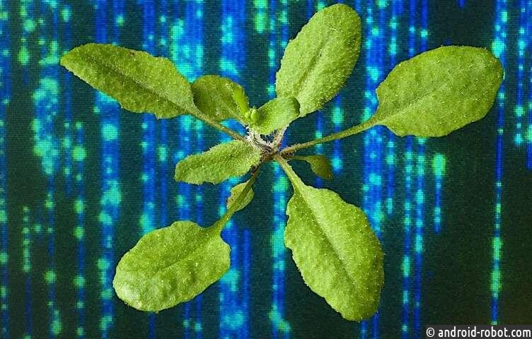 Новые технологии позволяют получить более детальную информацию о модифицированных растениях