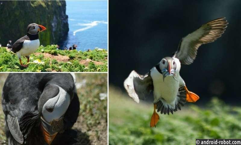 Исследование показывает, что птичий клюв не адаптировался к типам пищи