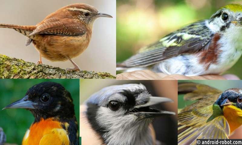 Ученые: Заповедники не помогают сохранять вымирающие виды птиц