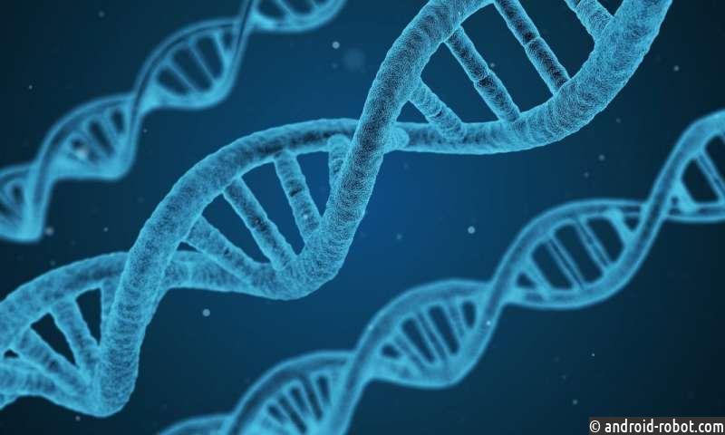 Эксперты предупреждают, что длительный анализ ДНК может привести к ошибкам