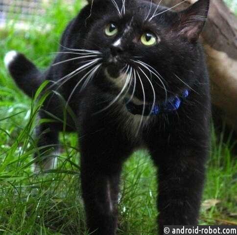 Ученые нашли новый подход в определении заболеваний у кошек