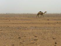 Исследование: Сахара меняется с мокрой на сухую каждые 20 000 лет