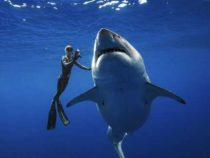 Акул вылавливают больше, чем указано в отчетах