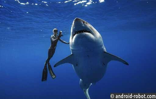 Исследователи сталкиваются лицом к лицу с огромной белой акулой