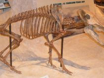 Окаменелости доисторических животных в виде свиней найдены в США