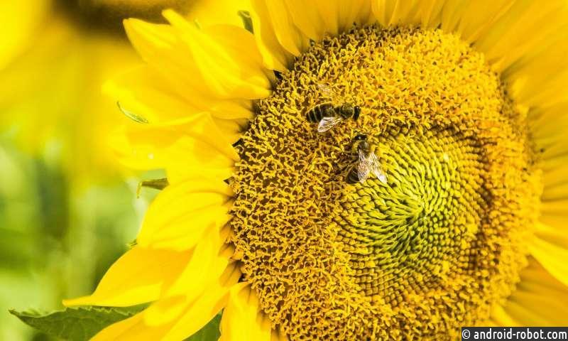 У пчел есть интеллект для базовой математики