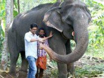 Самый старый в неволе слон умирает в возрасте 88 лет