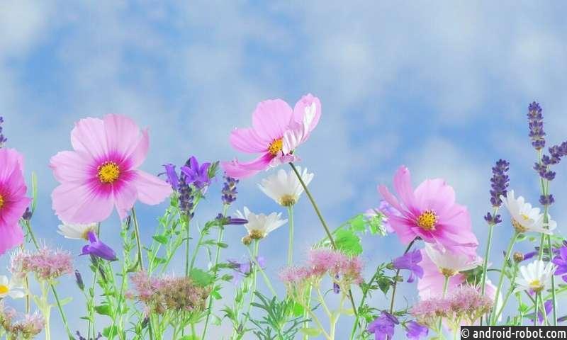 Исследование характеризует эволюцию пути репродуктивного здоровья цветковых растений