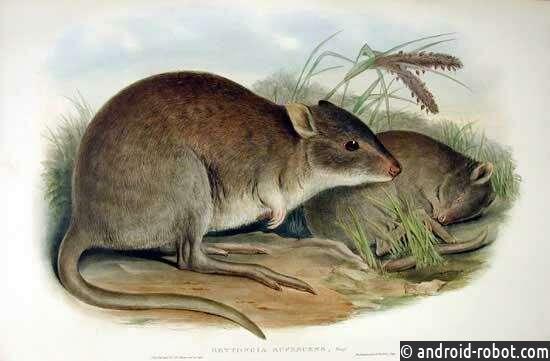 Местные охотники оказывают положительное влияние на пищевые сети в пустыне Австралии