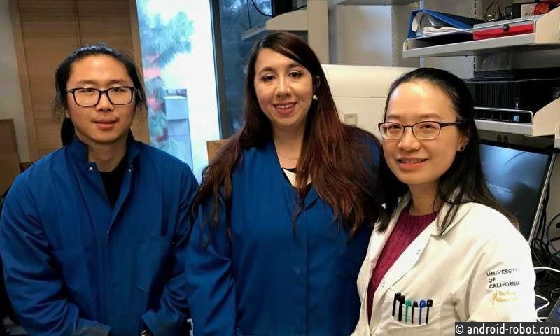 Ученые идентифицируют генетический механизм, связанный с тем, как женщины наследуют черты