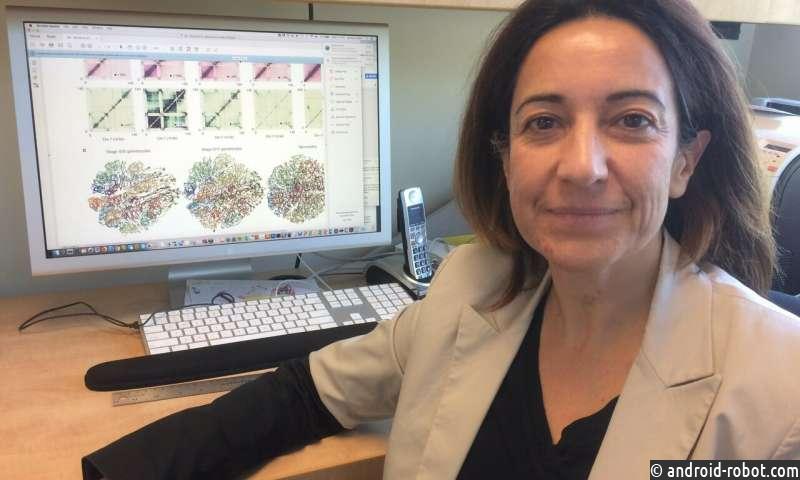 Геномная структура малярийных паразитов связана с вирулентностью