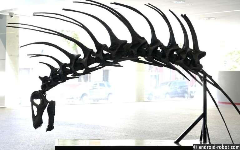 Динозавр, который защищался с помощью колючего позвоночника, найден в Аргентине