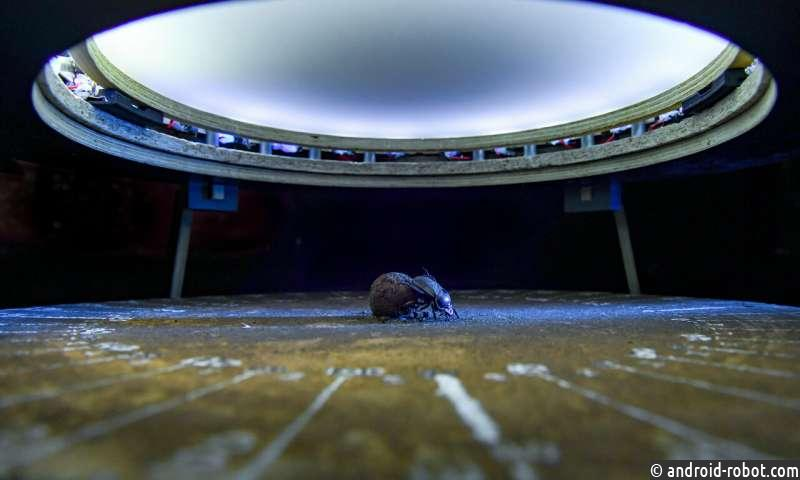 Навозные жуки лучше передвигаются при полной луне