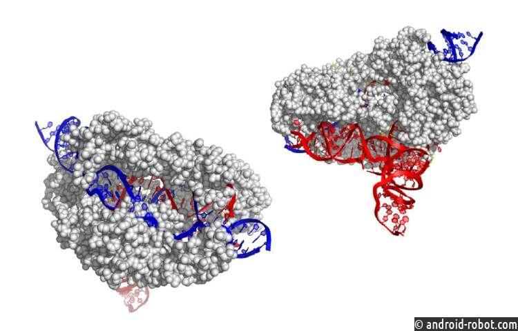 Ученые находят новый и меньший редактор гена CRISPR: CasX