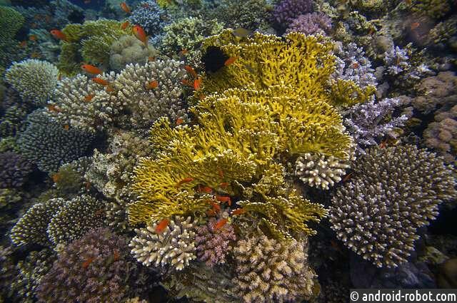 ученые изучают как коралловые рифы справляются см изменением климата