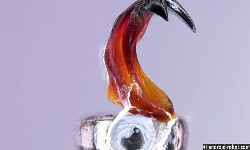 Моллюски станут ключом к созданию износостойких и наноразмерных материалов