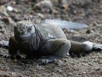 Пластиковые микрочастицы угрожают уникальной галапагосской фауне