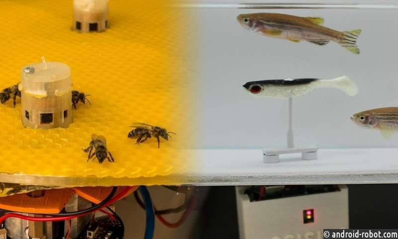 Роботы позволяют пчелам и рыбам разговаривать друг с другом