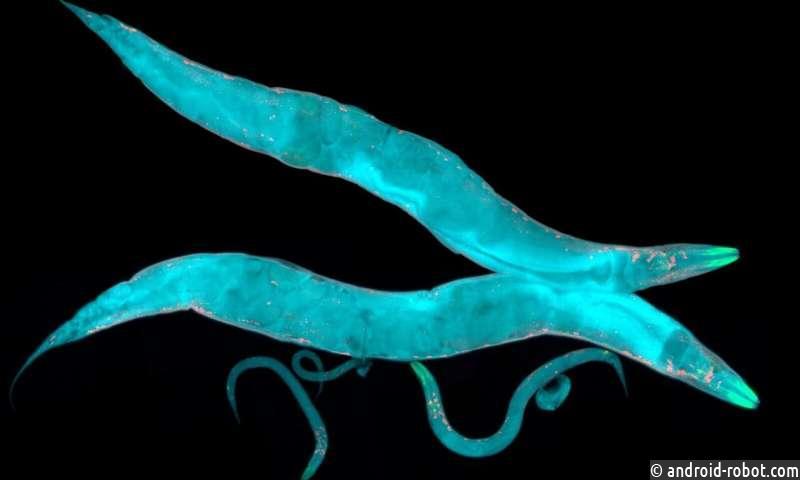 Машинное обучение используется для понимания и прогнозирования динамики поведения червя
