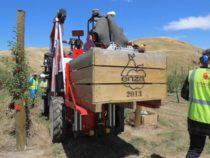 Автоматизированные роботы собирают яблоки в саду в Новой Зеландии