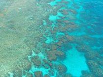 Роботы направлены на помощь Большому Барьерному рифу