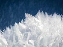 Ученые: Теперь мы знаем, как насекомые и бактерии контролируют лед