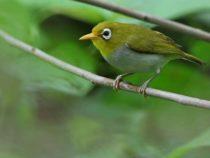 Зоологи обнаружили два новых вида птиц в Индонезии