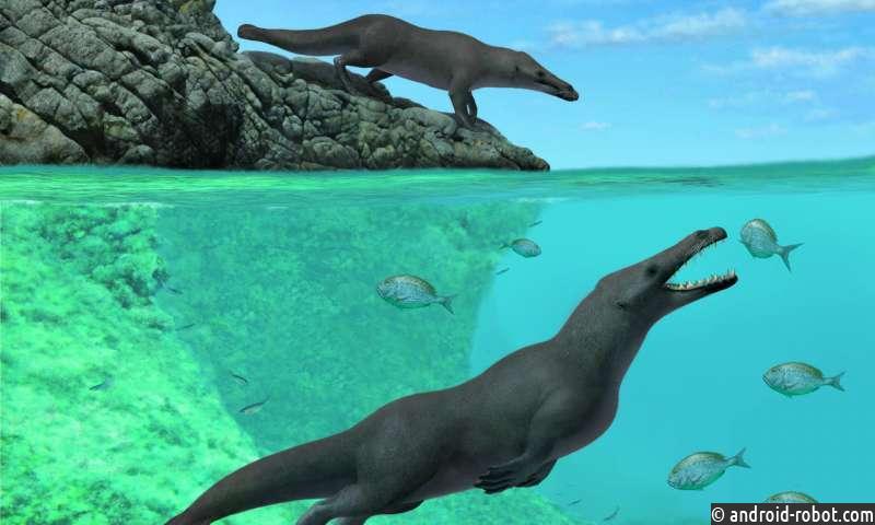 Древний, четвероногий кит с выдроподобными чертами, найден у побережья Перу