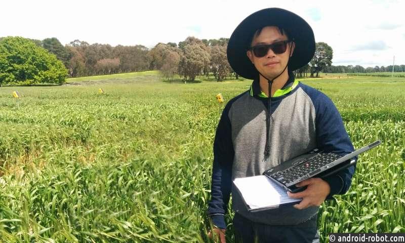 Насколько улучшение фотосинтеза улучшает урожайность?