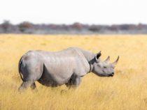 Роботы спасают носорогов