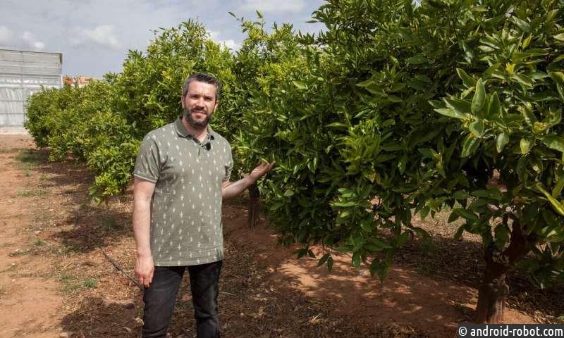 Изменение климата ставит под угрозу коммерческую жизнеспособность цитрусовых, виноградников и оливковых деревьев