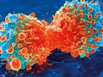 Ученые определяют новую стратегию борьбы с вирусными инфекциями и раком