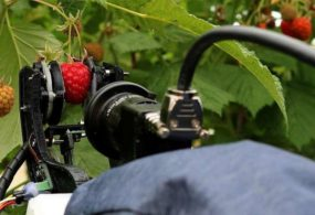 Завершены испытания роботизированной системы сбора урожая малины