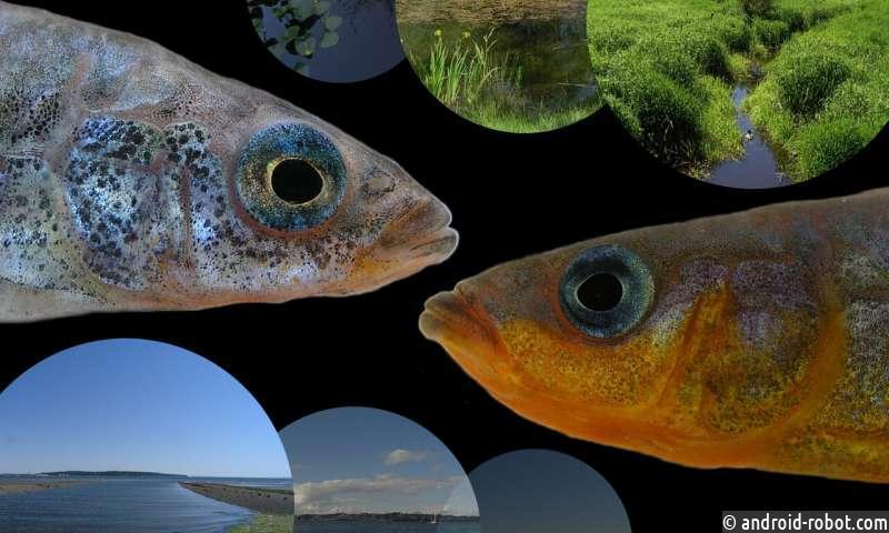 Генетическое преимущество позволяет некоторым морским рыбам заселять пресноводные места обитания