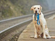 Программисты создали приложение попоиску домашних животных