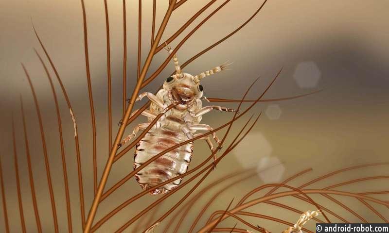 Обнаружены древние насекомые, которые питались перьями динозавров