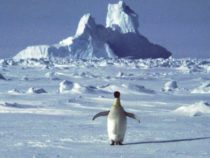Антарктида побила рекорд потепления климата