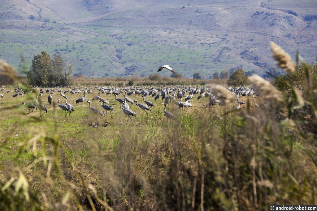 Израиль поэтапно выходит из карантина: заповедники и национальные парки открываются