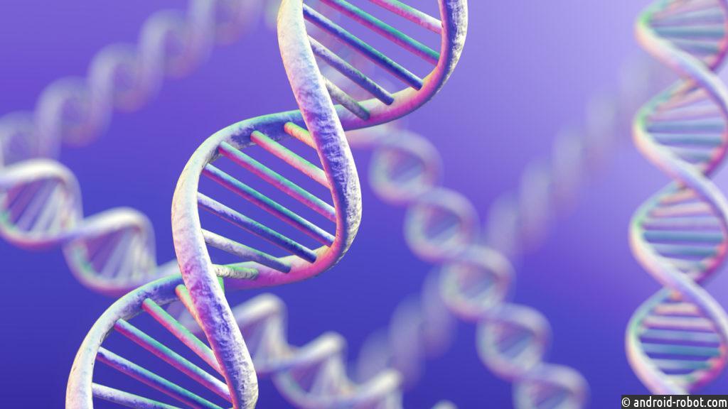 Ученые нашли способ создать искусственные мышцы по аналогии со спиралью ДНК