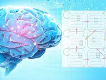 Простая модель мозга открывает новые направления исследований искусственного интеллекта