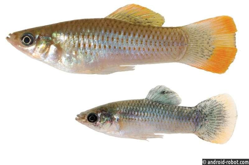 Ученые: Рыбы, адаптированные к токсинам, передают эпигенетические мутации пресноводному потомству