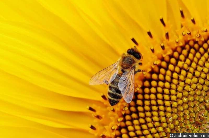 Риски исчезновения пчел и их воздействие на человечество
