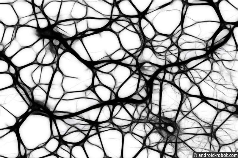 """Ученые: Нейроны зрительной коры головного мозга с течением времени """"дрейфуют"""""""