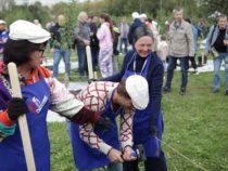 Москвичи на субботнике в Коломенском в честь 85-летия Юрия Лужкова посадили 250 фруктовых деревьев